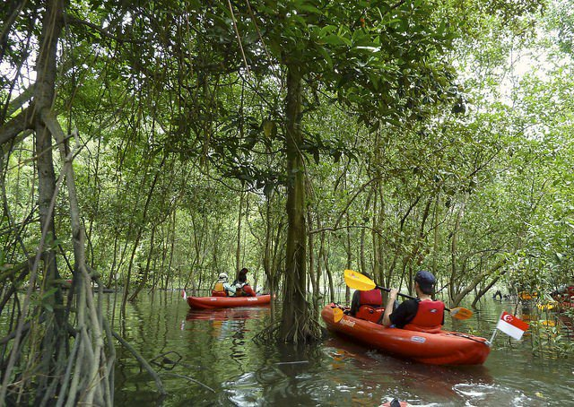 Unconventional Things To Do Singapore Kayak Mangrove Swamp