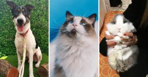 pet adoption cover image