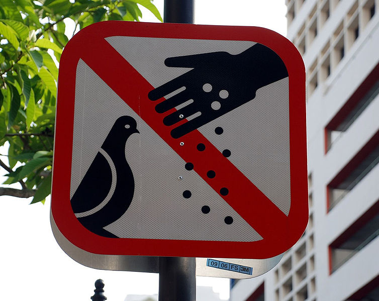 backpacking in singapore - no feeding pigeons signboard