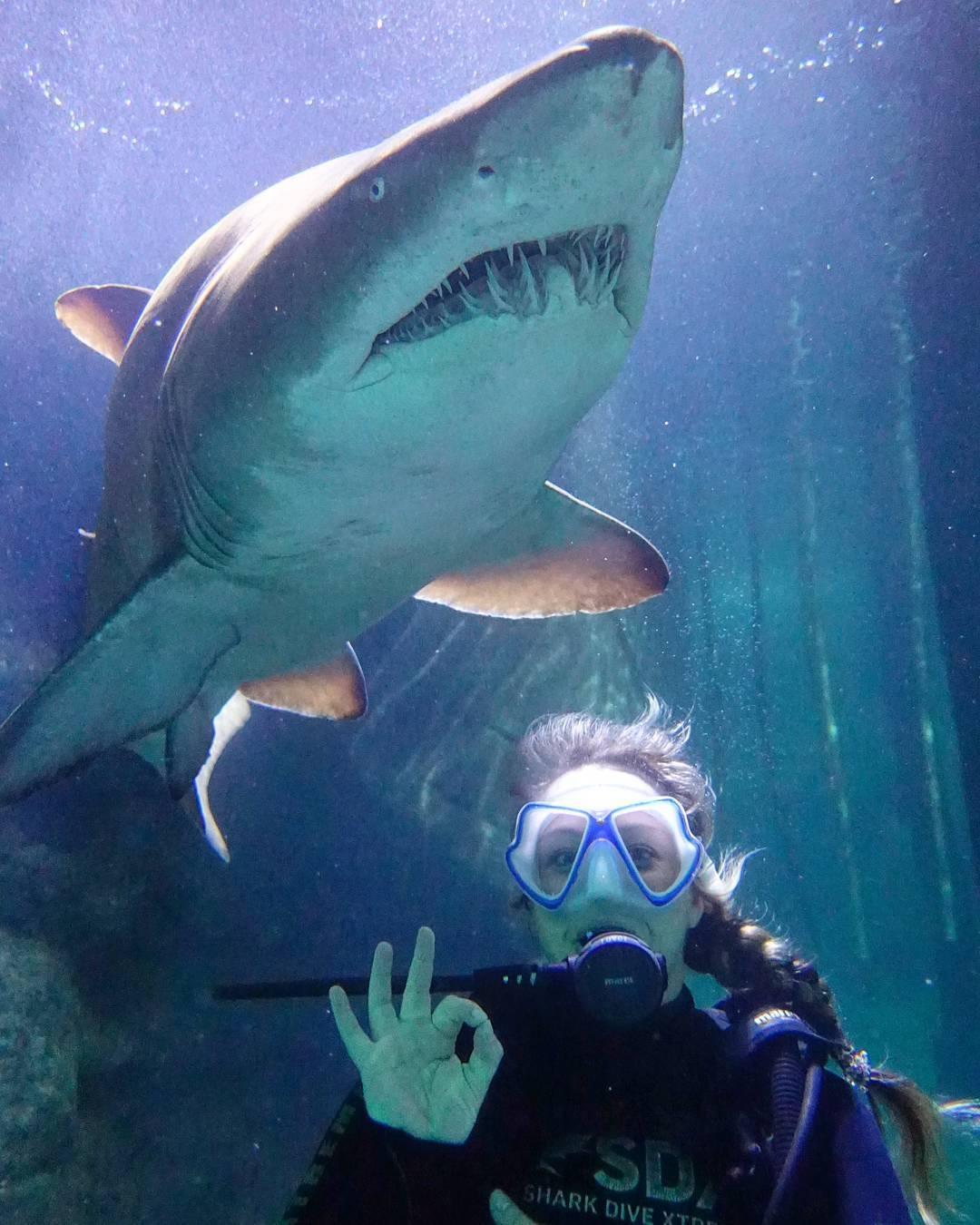 shark dive extreme