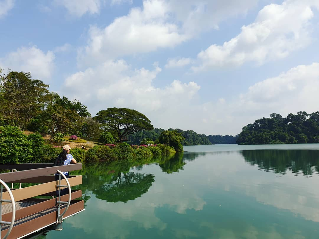 nature reserves and parks - macritchie reservoir