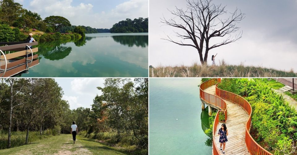 nature reserves and parks - collage of macritchie reservoir park, jurong lake gardens, tampines eco green and punggol waterway park