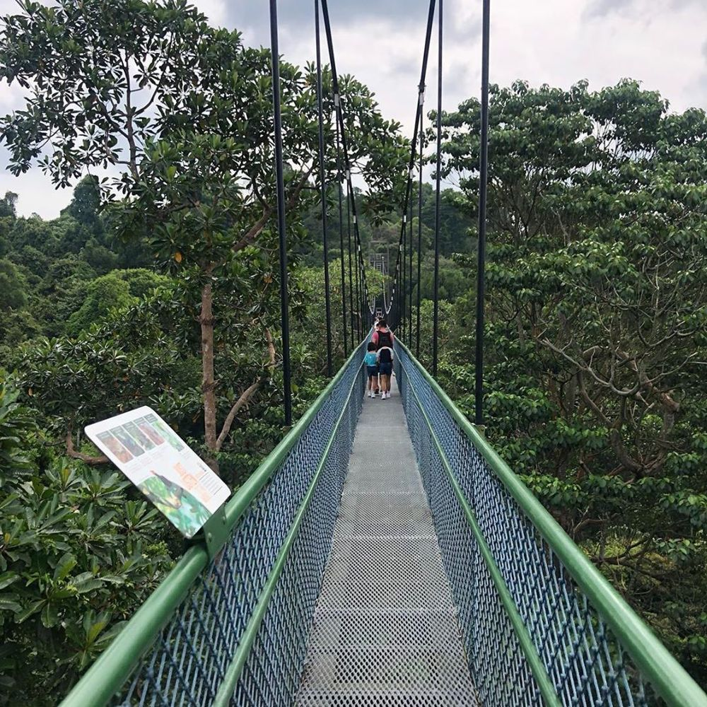 nature reserves and parks - macritchie reservoir treetop walk