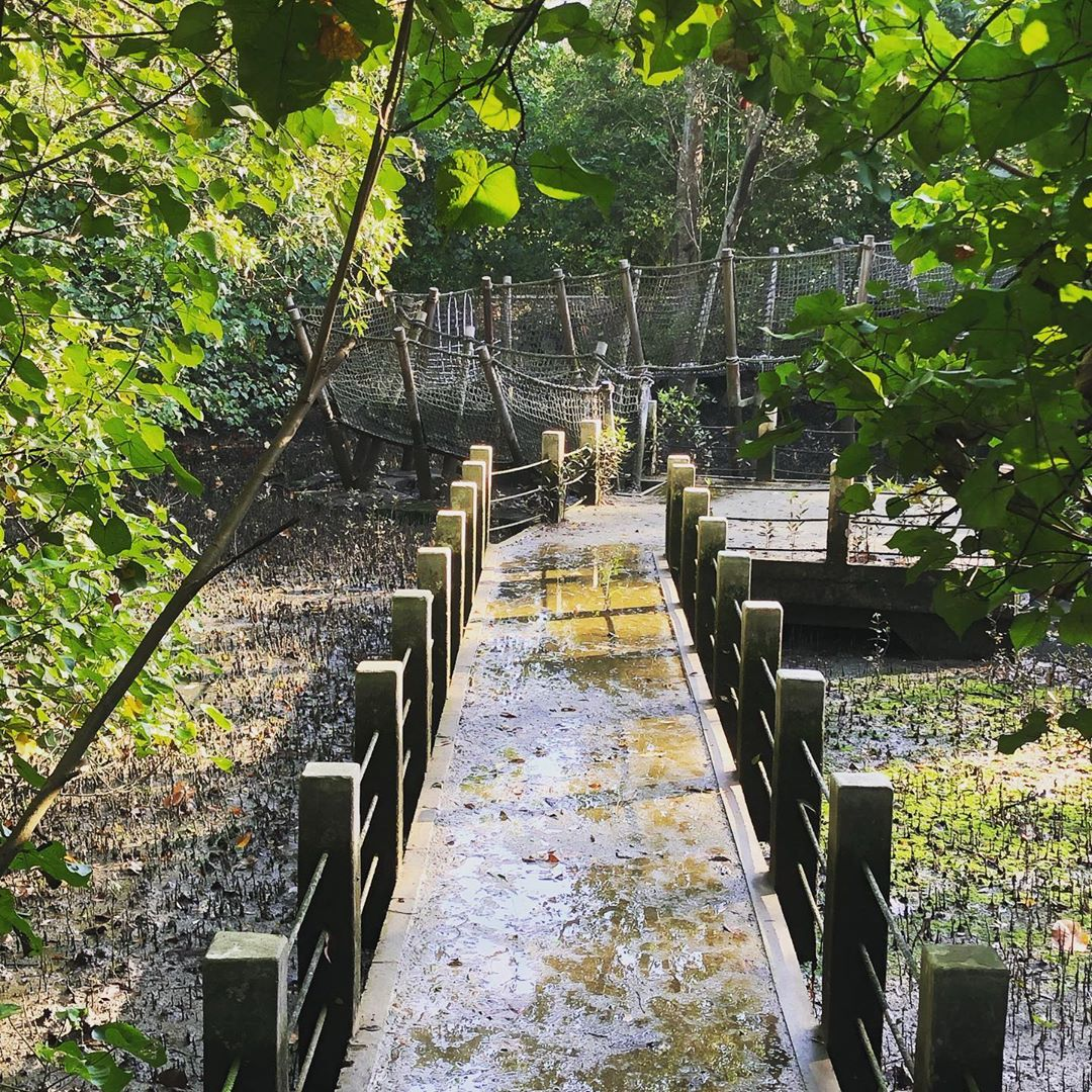 nature reserves and parks - sungei buloh wetland reserve mangrove walk