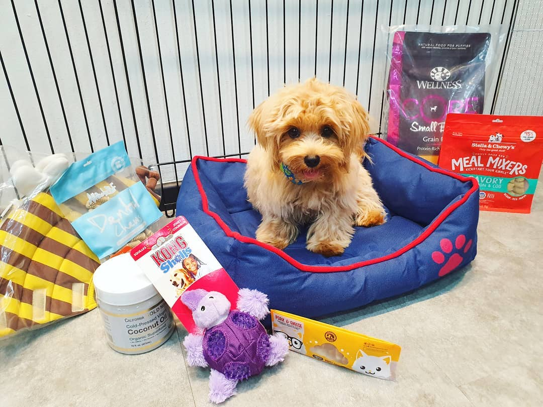 10 Online Pet Stores Based In Singapore With Delivery For Everything Your Furkid Needs good dog people