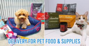 10 Online Pet Stores Based In Singapore With Delivery For Everything Your Furkid Needs
