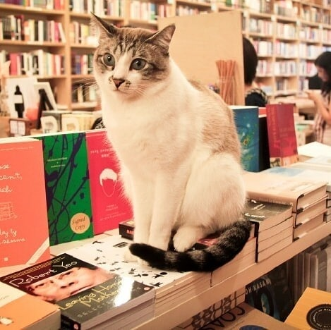 Secondhand Bookstores - Books Actually cat