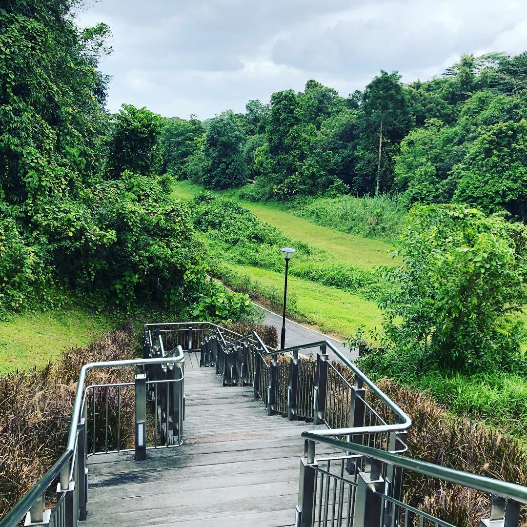 staircase to nature park
