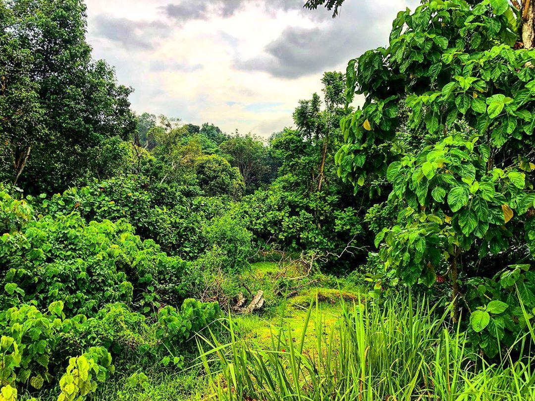 greenery nature