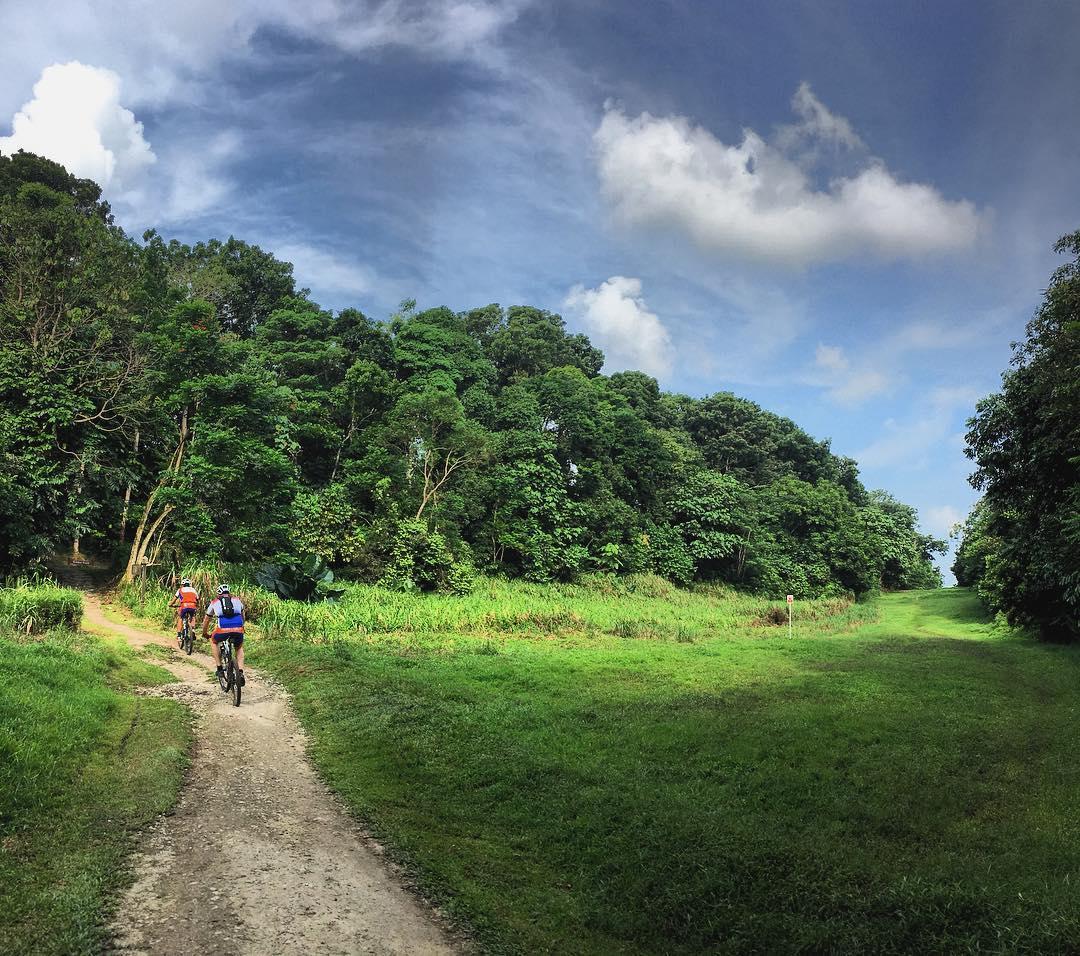 greenery nature park