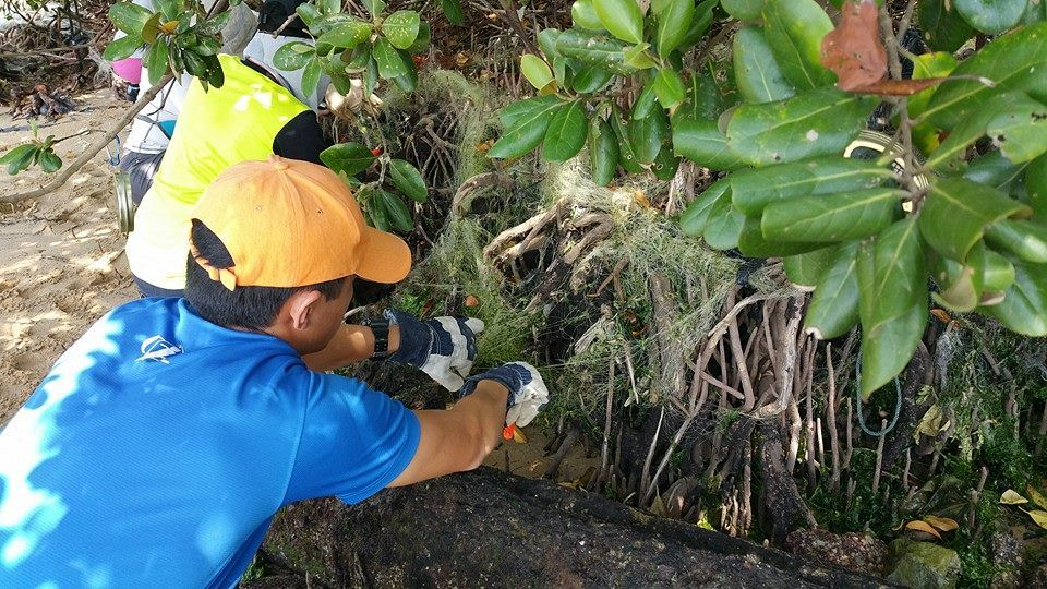 Cleanup groups to join in Singapore Restore Ubin Mangroves