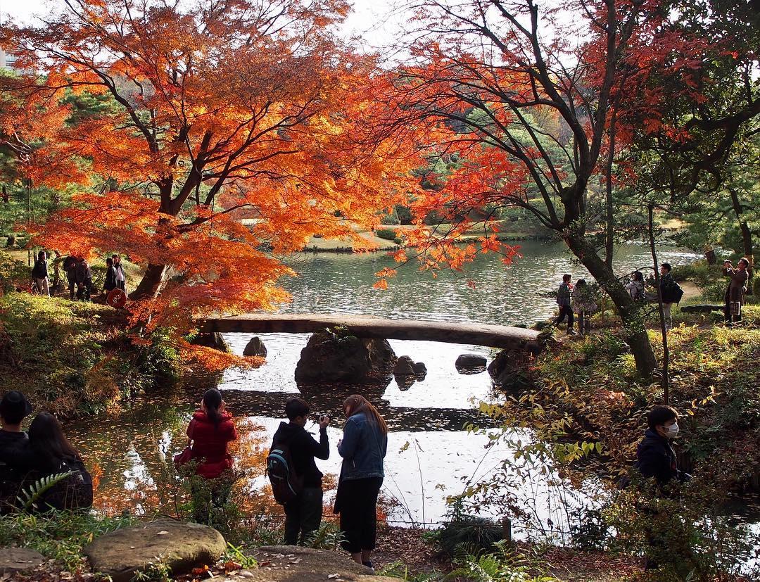 Autumn Japan 2019 rikugien garden