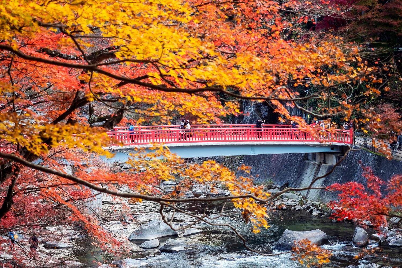 Autumn Japan 2019 nagoya