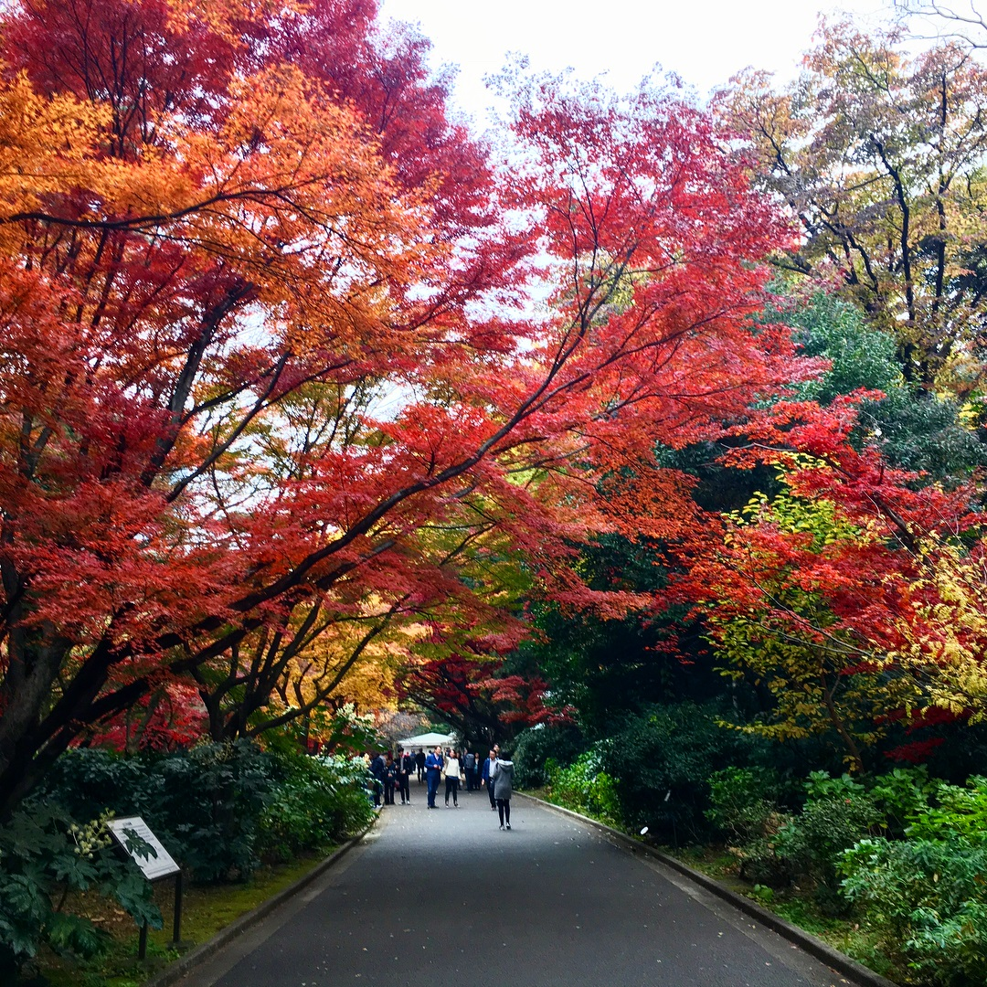 Autumn Japan 2019 shinjuku