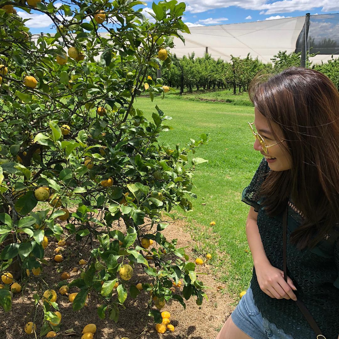 chan brothers sydney nsw glenbernie orchard