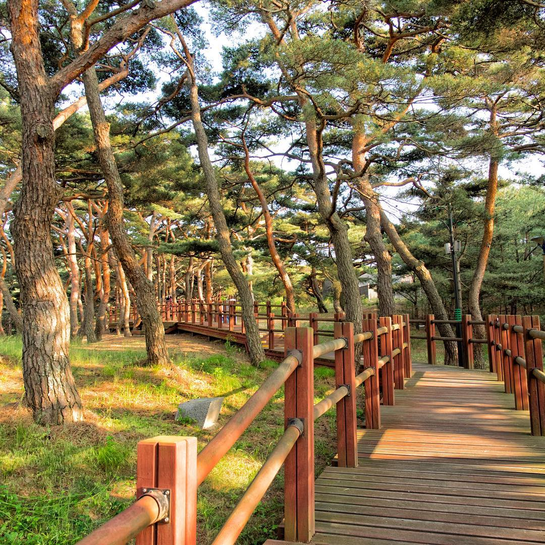 8 Korean Islands Near Seoul For Day Trips From Just 1h Away That Aren't Jeju or Nami seopori beach