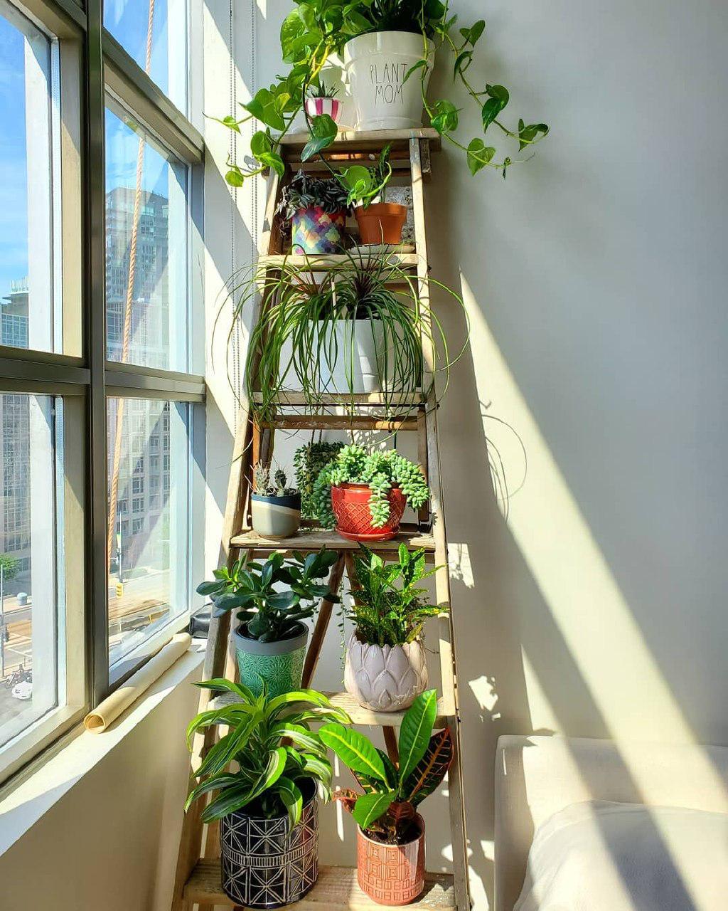 Smart Storage Plant Ladder
