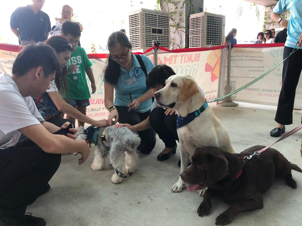 kid-friendly volunteer therapy dogs singapore
