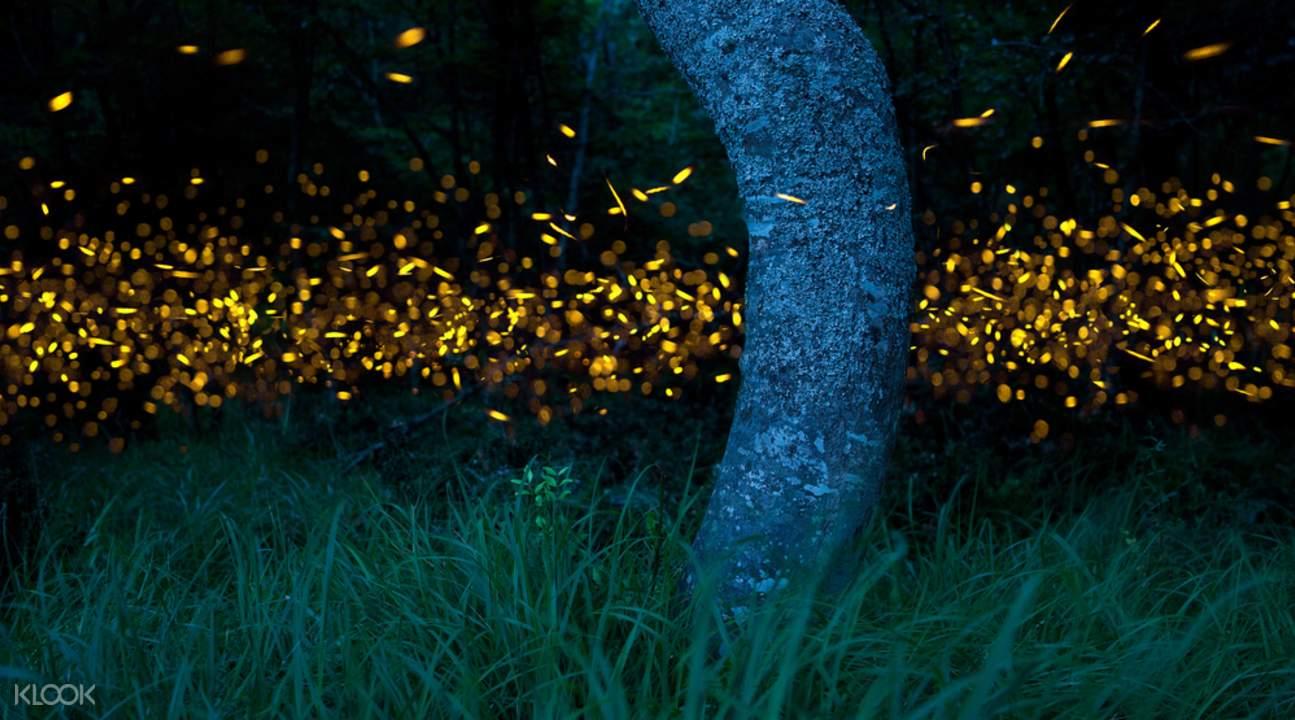 kota kinabalu resorts and hotels - firefly cruise during klias wildlife cruise