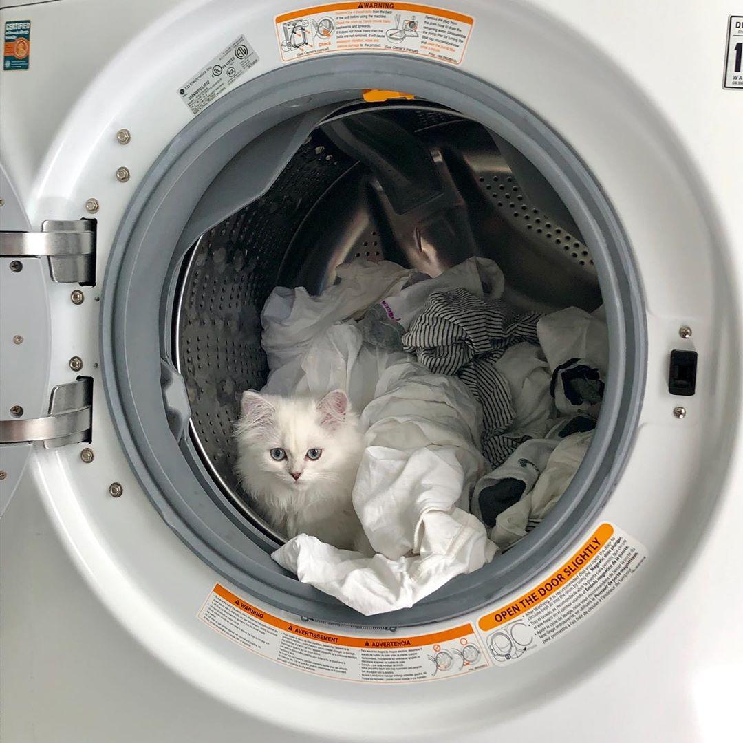 laundry tips - cat in washing machine