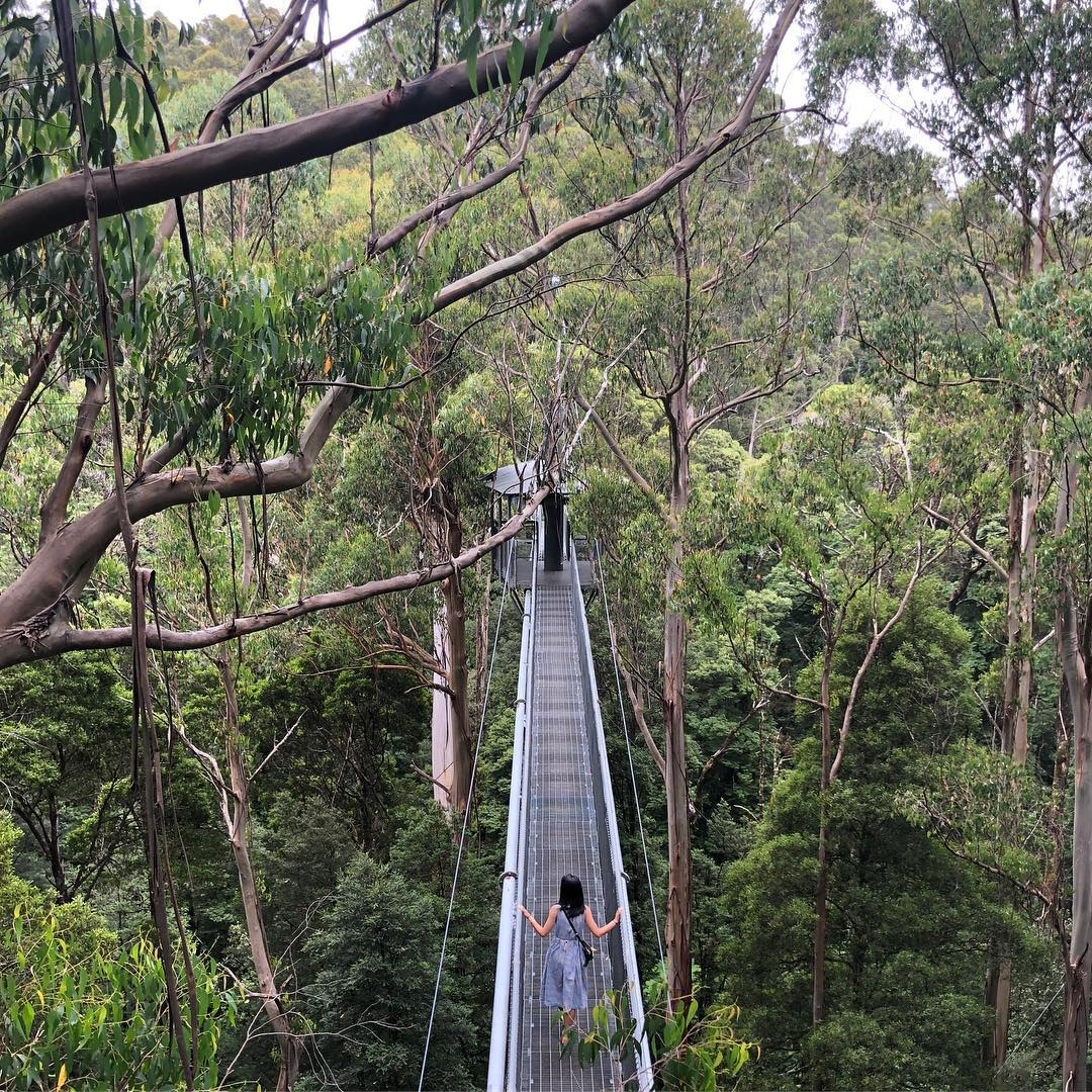 Chan Brothers Australia Sale Otway Fly Treetop Walk