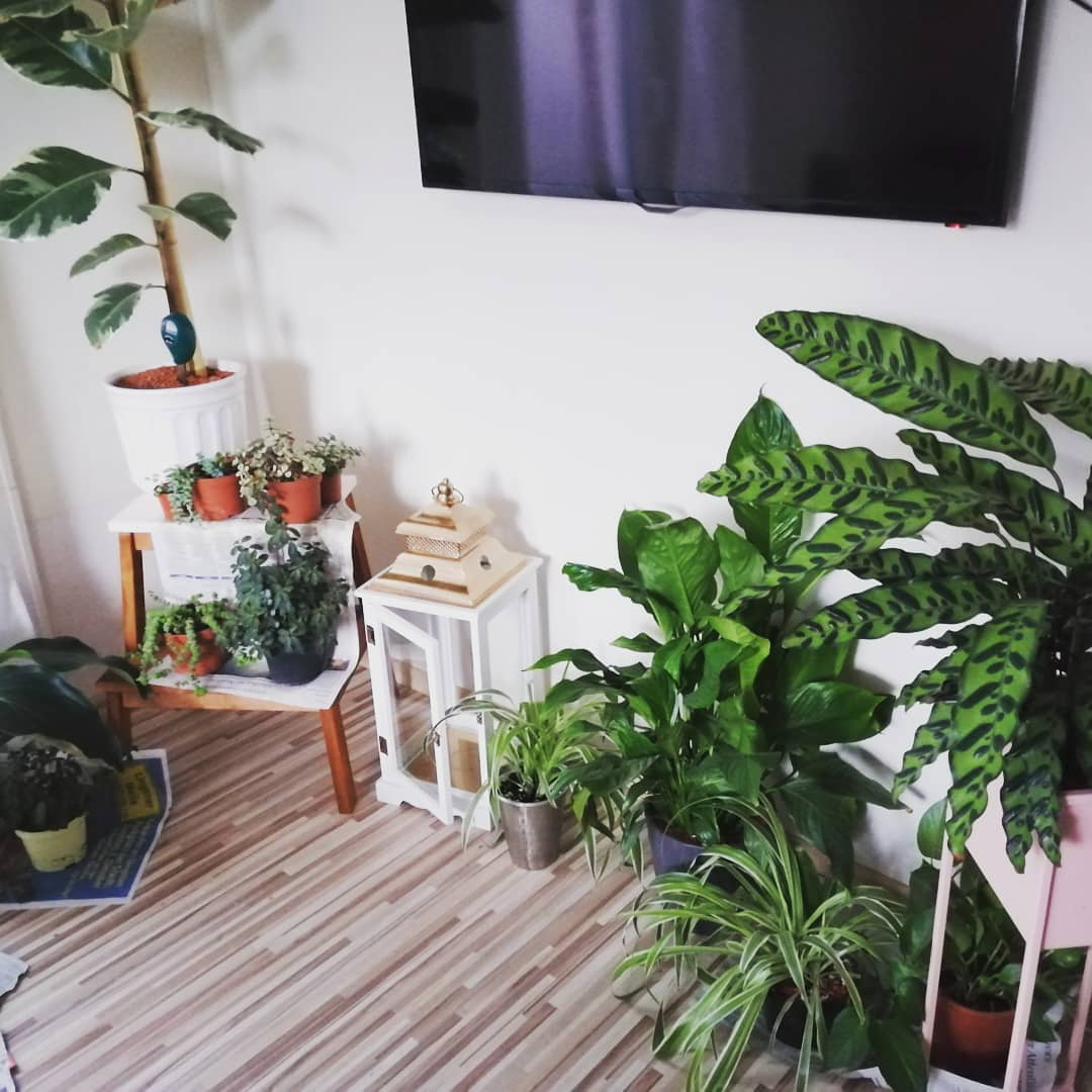 indoor house plants keep house cool