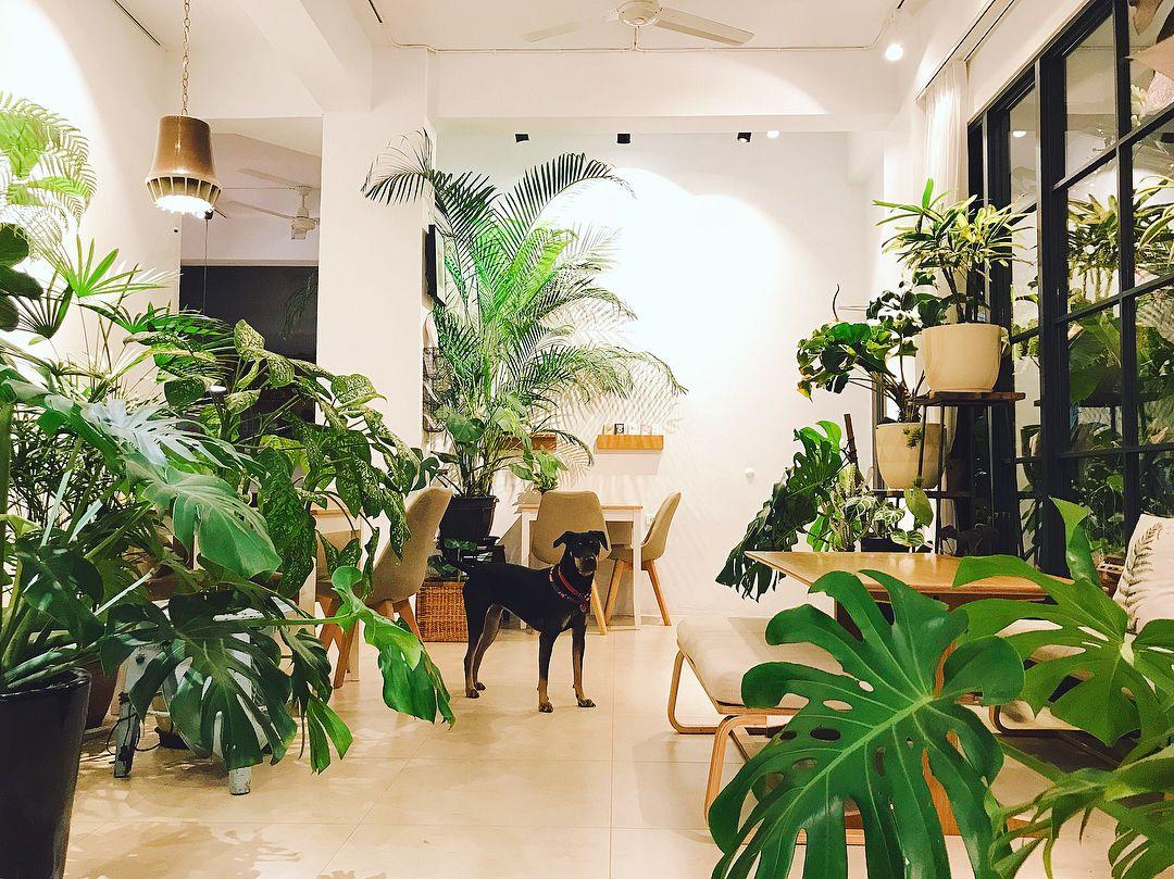 Vivify cafe Hualien