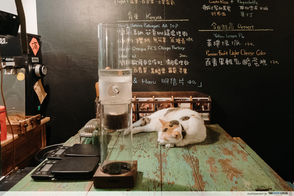 KOHI cat cafe Hualien