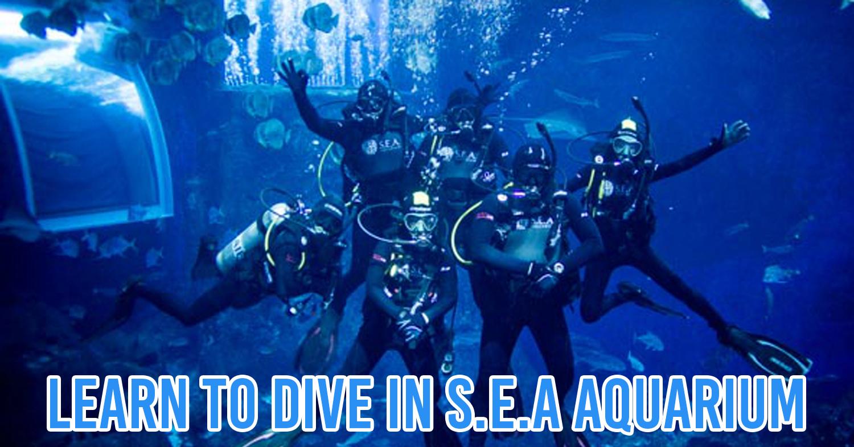 Scuba Diving in Singapore Guide
