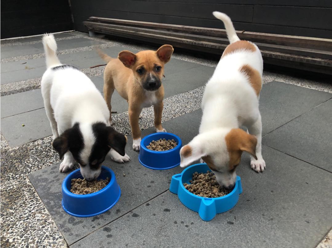 giving week 2019 - animal shelter feeding dogs