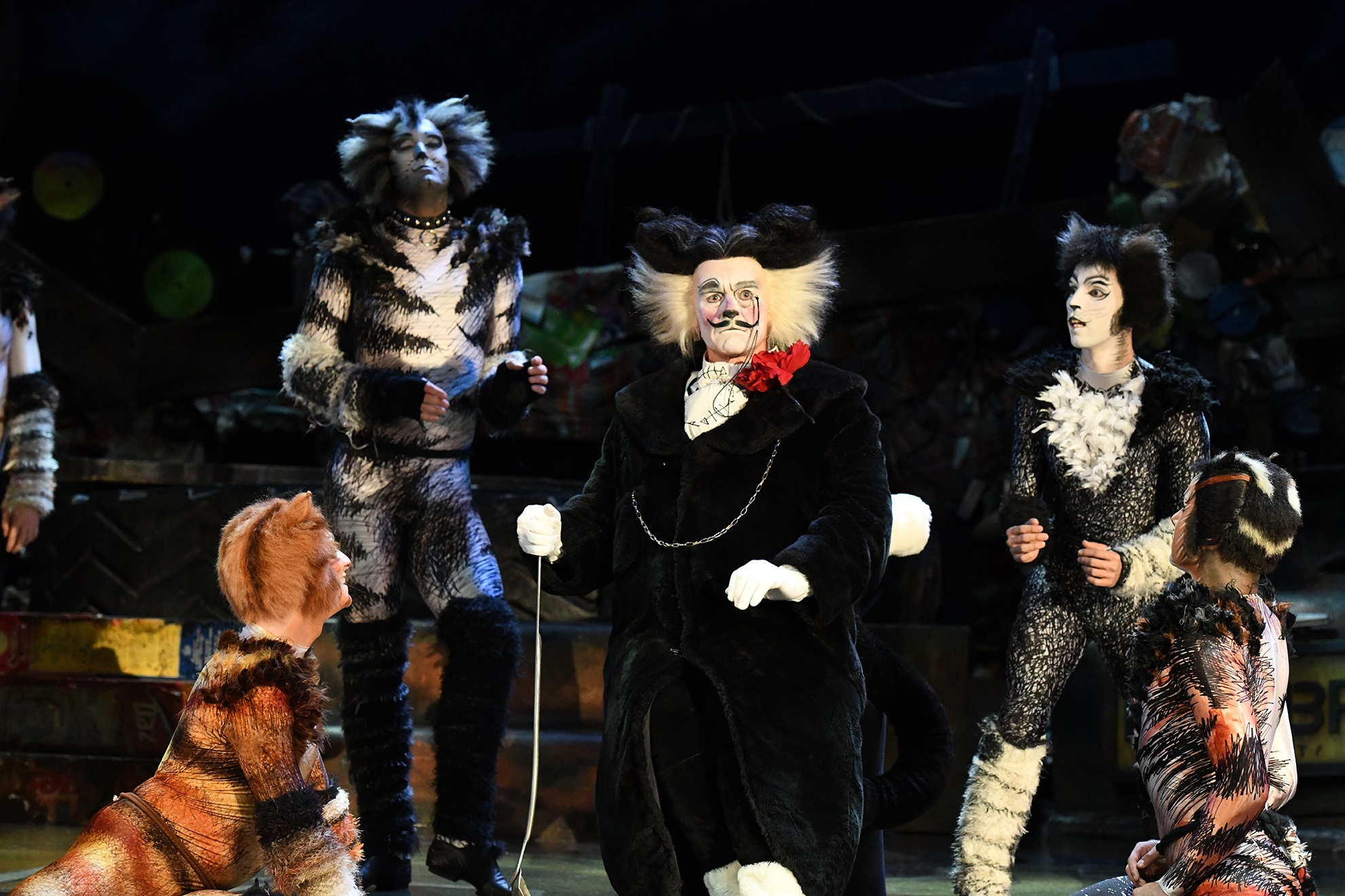 things to do december 2019 cats musical