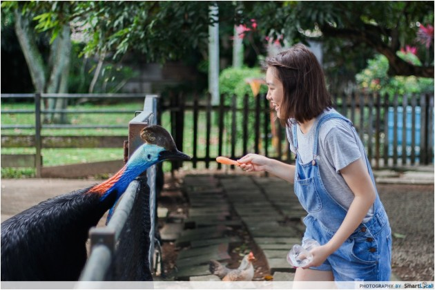 101 things to do in Singapore The Animal Resort