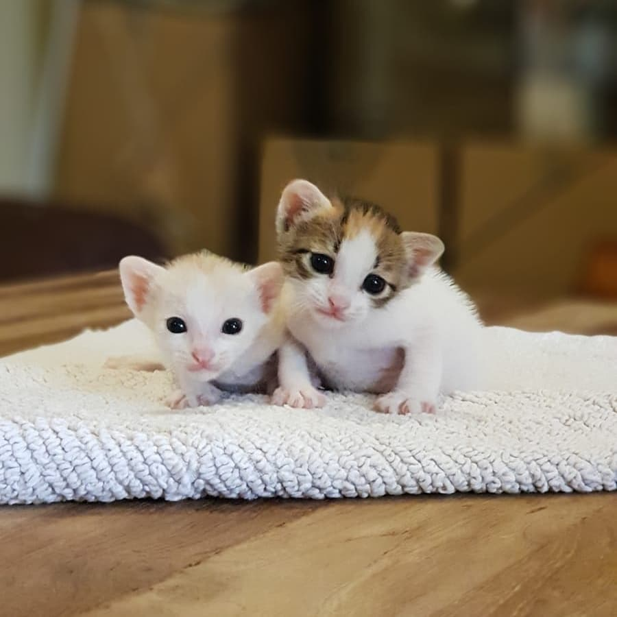 101 things to do in Singapore Kitten Sanctuary
