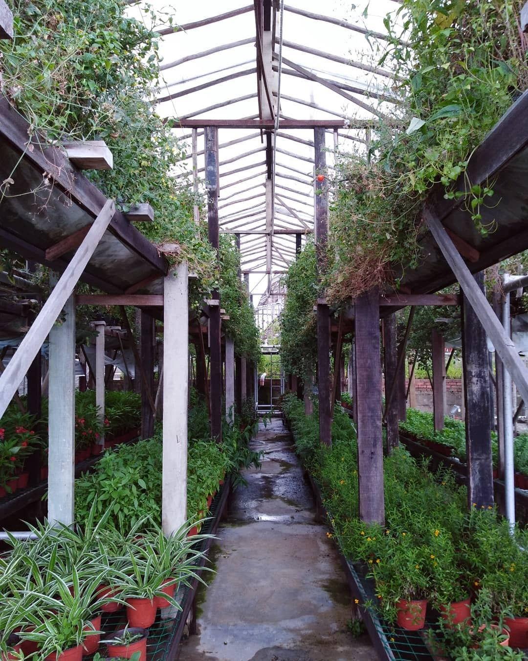101 things to do in Singapore urban farm