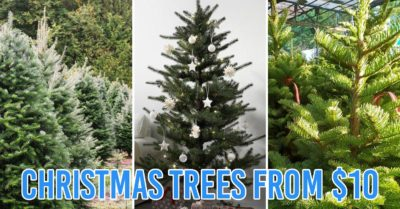 places to buy cheap christmas tree in singapore - collage of sing see soon, ikea and fareast flora