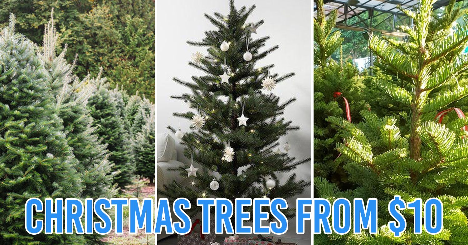10 Places To Buy Cheap Christmas Trees In Singapore - Real