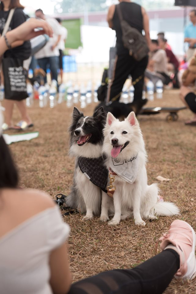 happy dogs at an event organised by bark a tree singapore