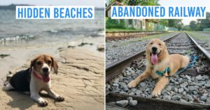 Dog-friendly hiking trails