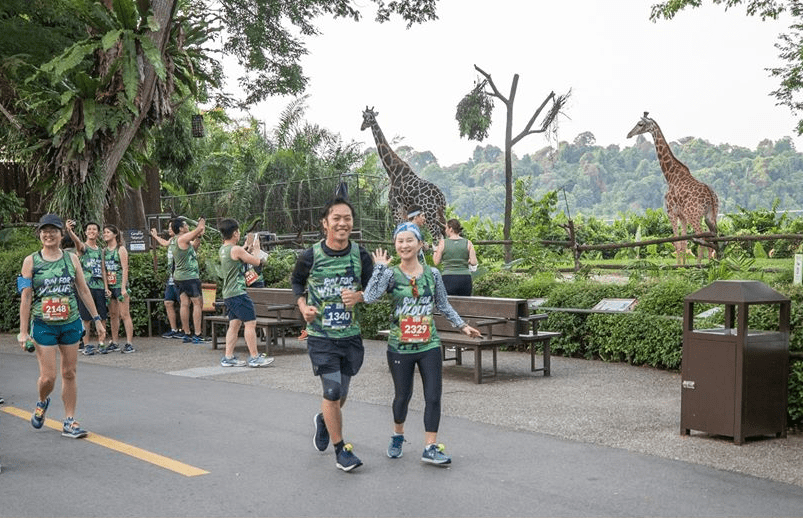 Safari Zoo Run 2020 Singapore Giraffes