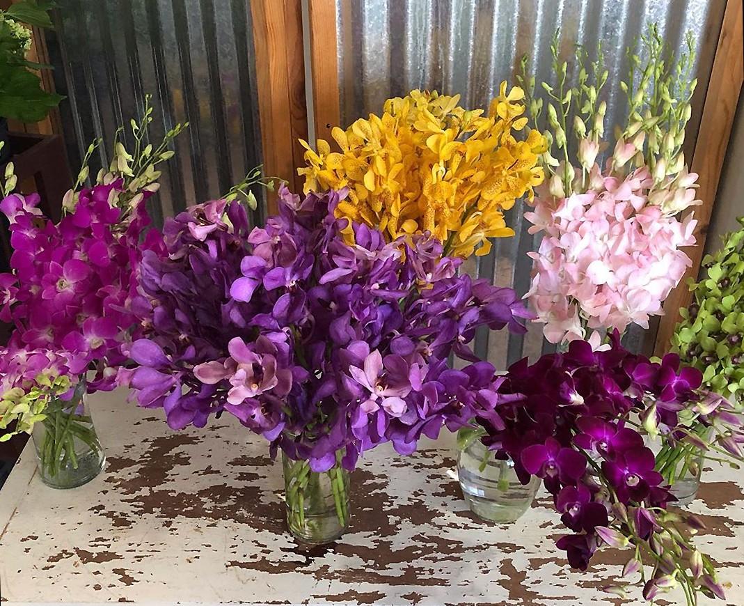 dendrobium orchids of different colours