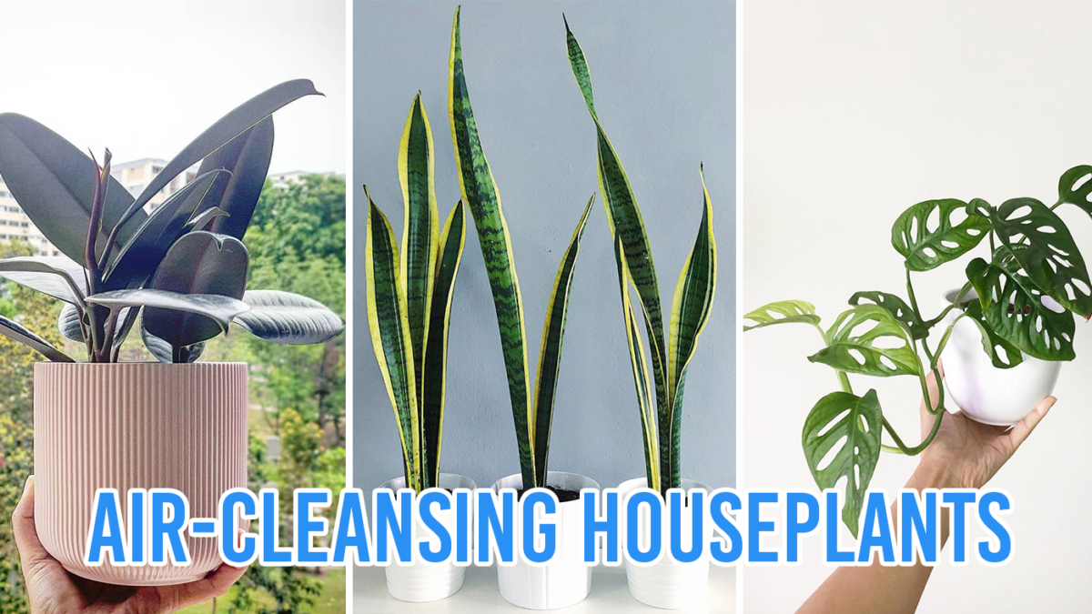 10 Indoor Plants That Purify The Air And Help You Breathe Better According To Science