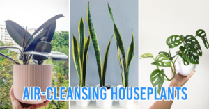 indoor houseplants that purify the air