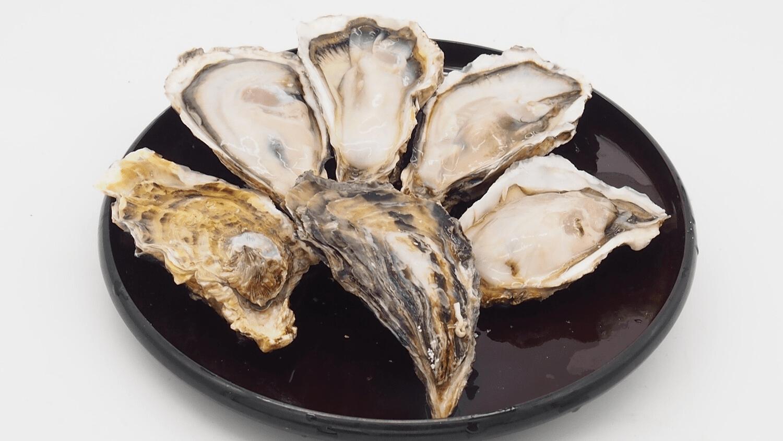 Pan Ocean Seafood Warehouse Sale - january 2020 deals