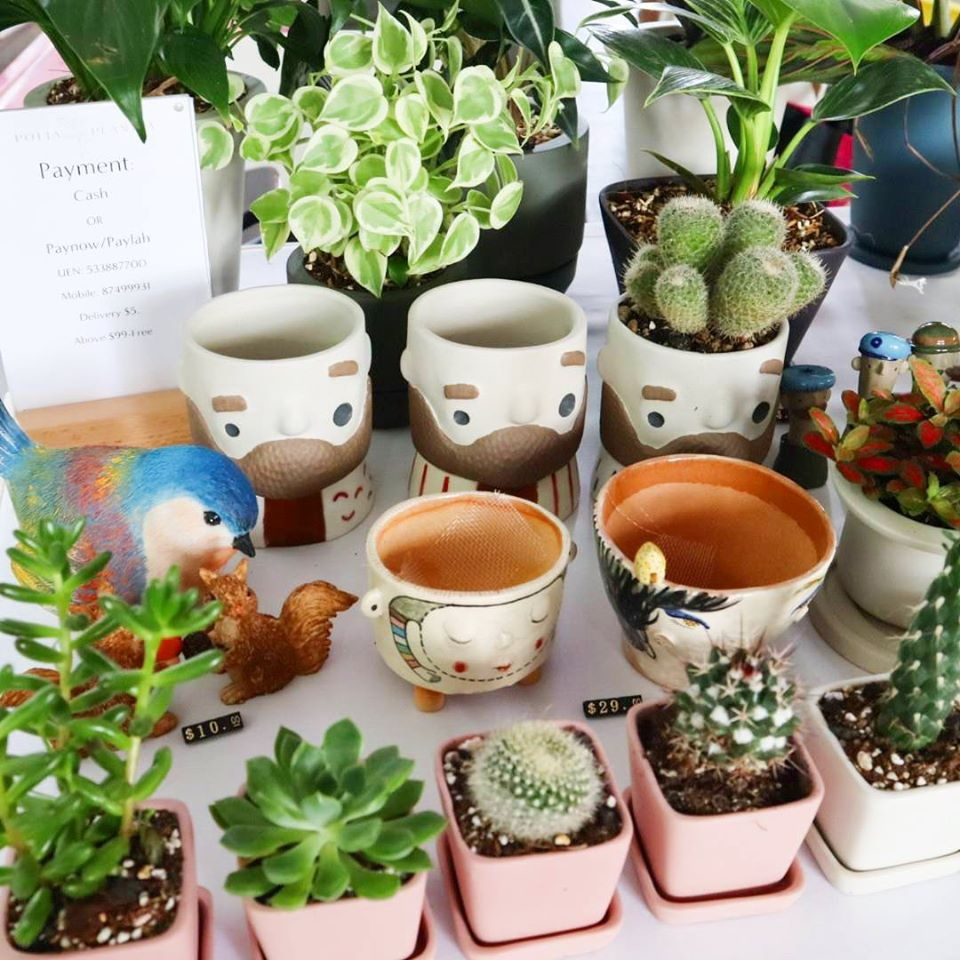 Potta Plantta quirky planters