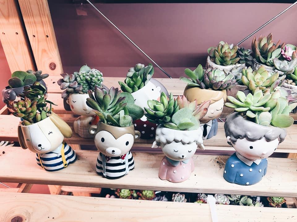Rabbit Island SG planters