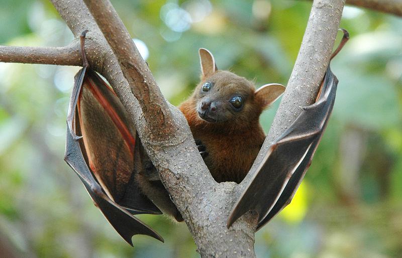 coronavirus bat soup