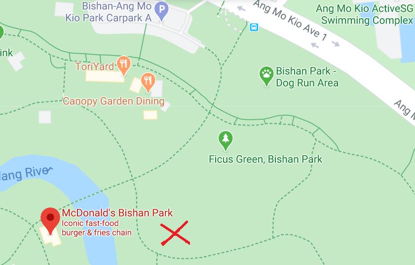 Bishan Park Ficus Green