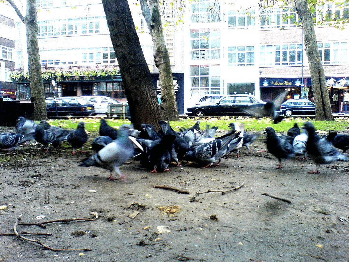 Bird Flu Singapore