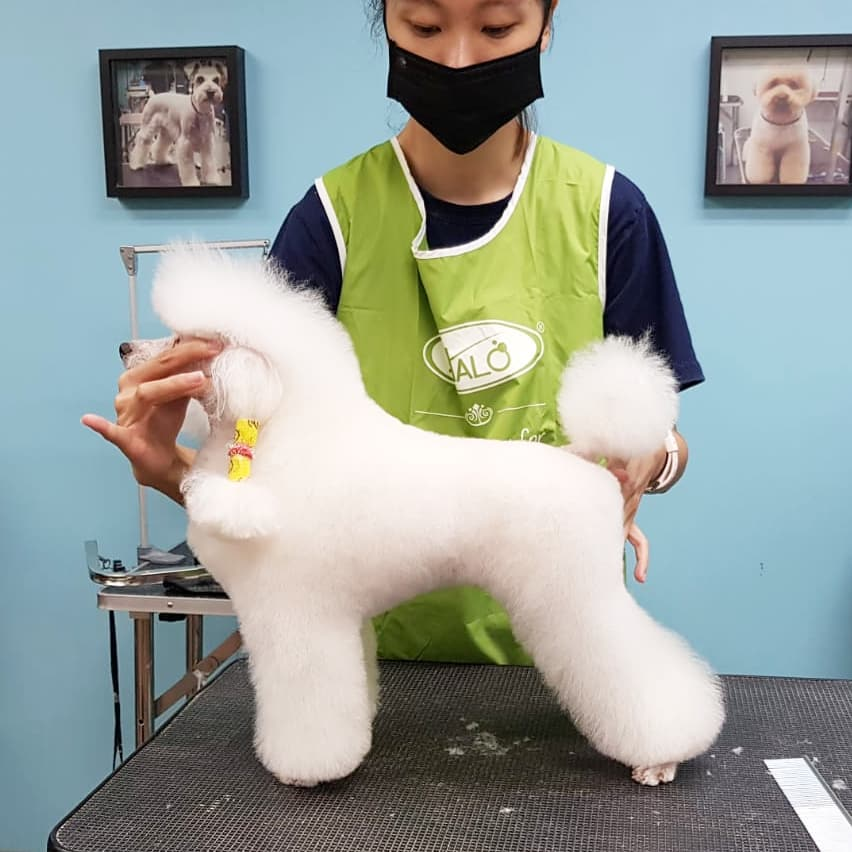 Pet grooming in Singapore - Art of Pets