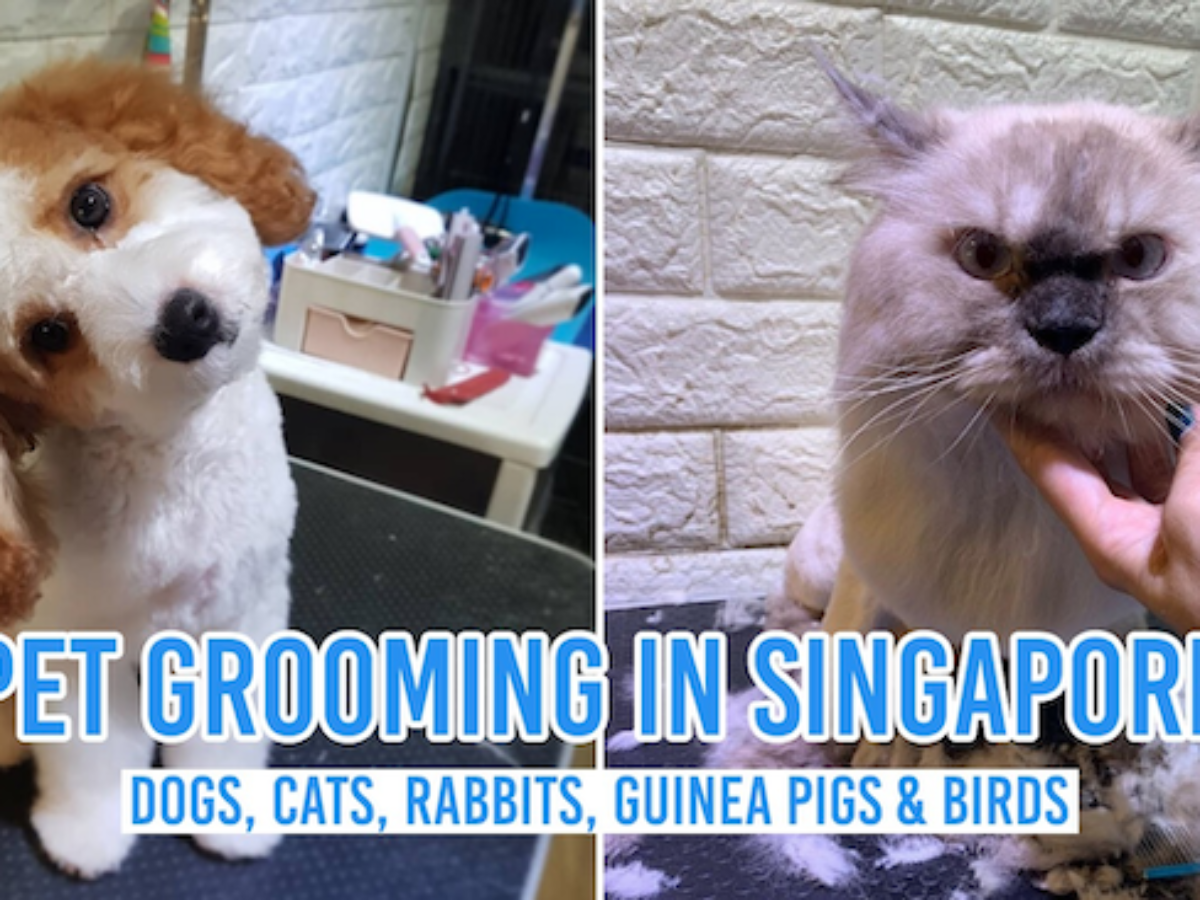 15 Pet Grooming Salons In Singapore Sorted By Location
